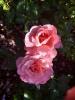 Las flores del Jardín (3/10/2016)