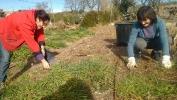 Renovando el jardín