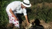 Los Tulasis del Centro Amma  ya están listos… para ofrecernos sus beneficios
