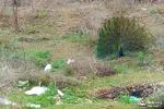 Gestiión conjunta de residuos