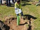 Más-plantaciones-de-árboles-en-Segovia