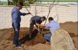 Plantación de 10 robles en Avila, 13 de Marzo de 2015